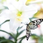 butterfly-1278815__180